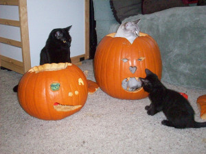 pumpkin cats
